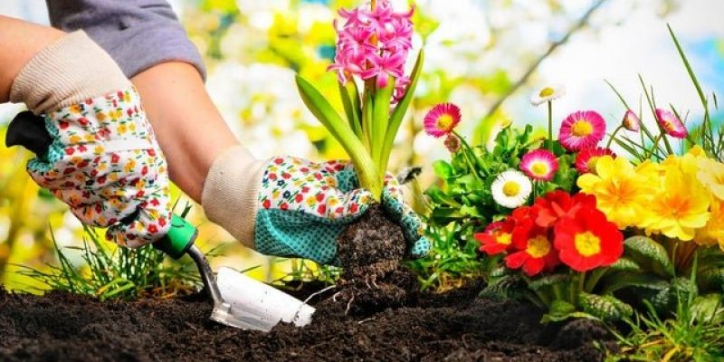 Top Summer Gardening Ideas